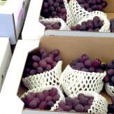 農産物の管理・出荷